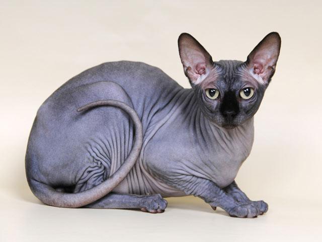 Информация о кошках